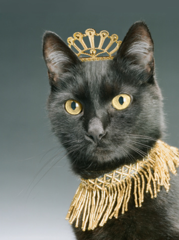 black cat「Black cat wearing gold crown and necklace, close-up」:スマホ壁紙(15)