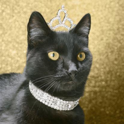 black cat「Black cat wearing dimond collar and tiara」:スマホ壁紙(14)