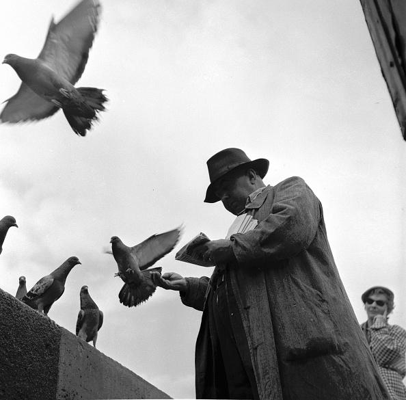 Tranquil Scene「Birdman Of Paris」:写真・画像(19)[壁紙.com]