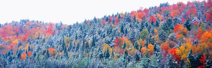 """Adirondack Mountains「""""Snow and Autumn trees, Adirondack Mountains, New York State""""」:スマホ壁紙(3)"""