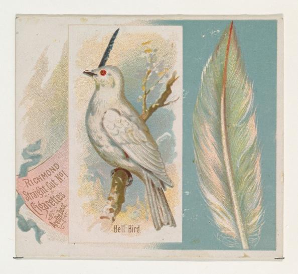 Songbird「Bell Bird」:写真・画像(15)[壁紙.com]