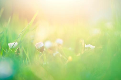 花畑「フィールド、太陽の光」:スマホ壁紙(6)