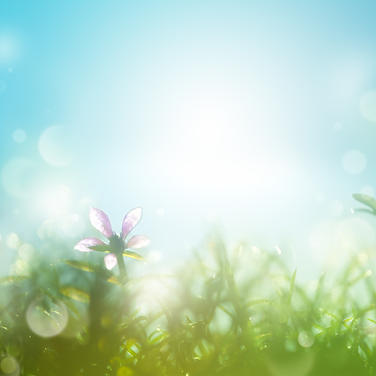 Green Color「Field with daisies in the early morning.」:スマホ壁紙(13)