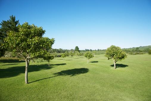 Public Park「field with trees」:スマホ壁紙(3)
