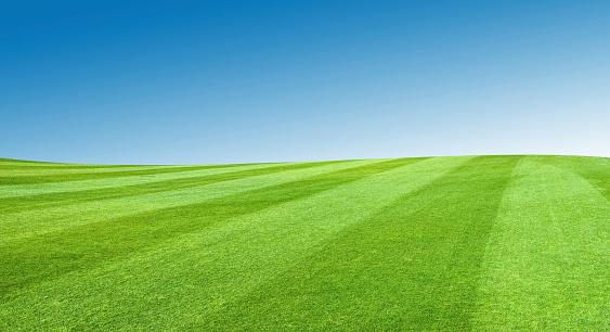 Rolling Landscape「Field With Blue Sky」:スマホ壁紙(17)