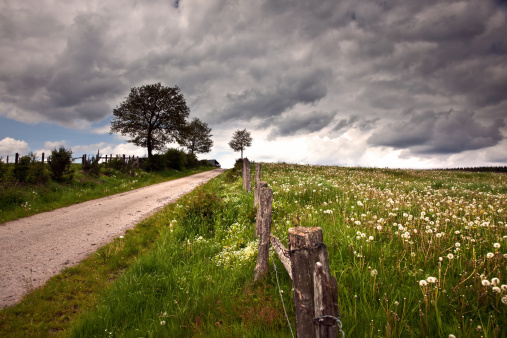 Ardennes Forest「Field with Dandelions under Dark Sky in Ardennen」:スマホ壁紙(0)