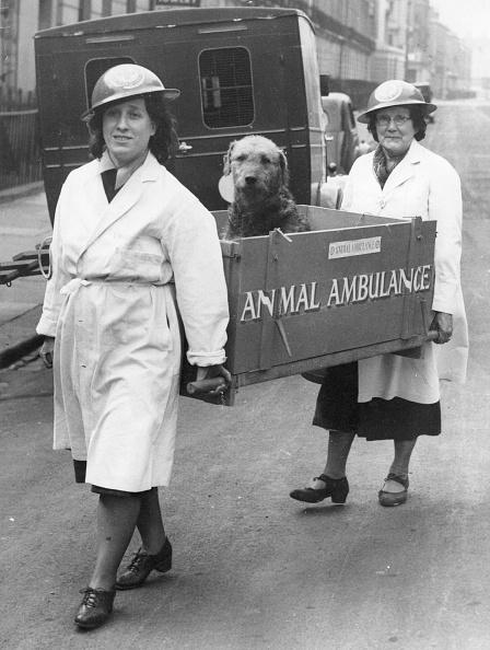 動物「Animal Ambulance」:写真・画像(0)[壁紙.com]