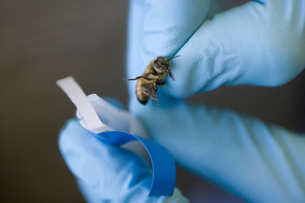 Rick Scibelli「Los Alamos Laboratory Trains Bees To Detect Explosives」:写真・画像(10)[壁紙.com]