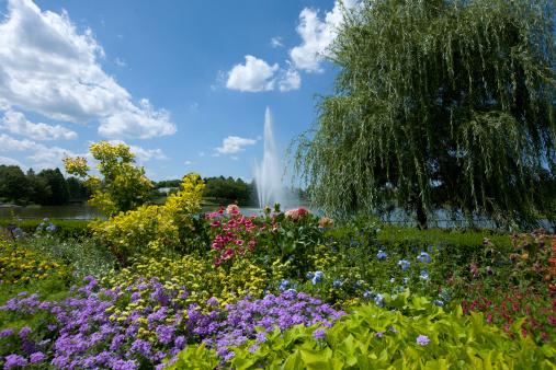 Botanical Garden「Botanic Garden」:スマホ壁紙(14)