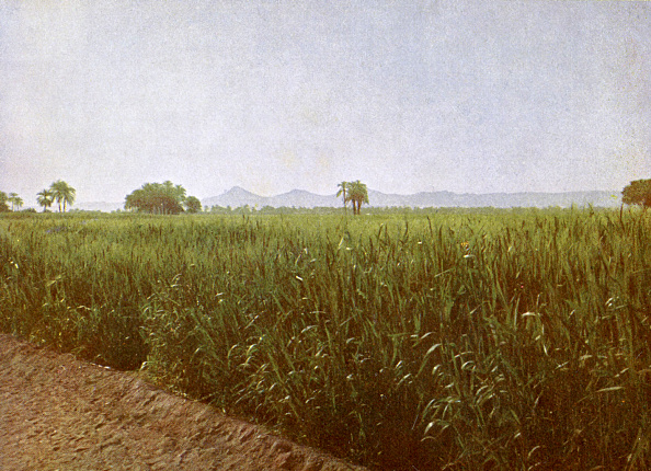Farm「Wheat field near Luxor, Egypt」:写真・画像(5)[壁紙.com]