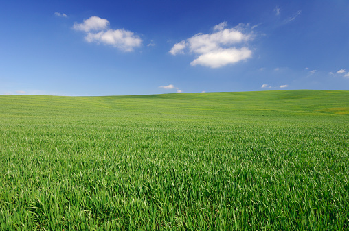 Pasture「Wheat field, spring」:スマホ壁紙(11)