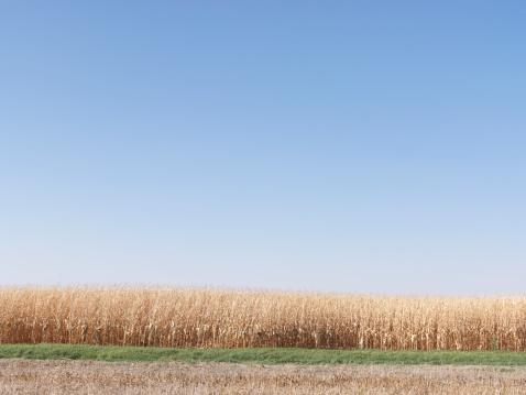 Continuity「Wheat fields」:スマホ壁紙(11)