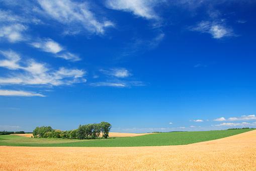 July「Wheat field」:スマホ壁紙(18)