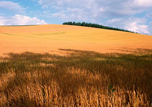 Grove「Wheat Field」:スマホ壁紙(17)