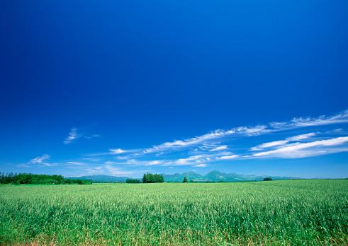 雲「Wheat Field」:スマホ壁紙(13)