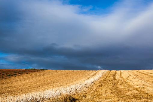 Camino De Santiago「Wheat (Triticum spp.) field, La Rioja, Spain」:スマホ壁紙(9)