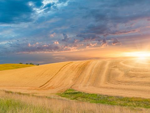 Barley「wheat field in sunset, Palouse, WA, USA」:スマホ壁紙(15)