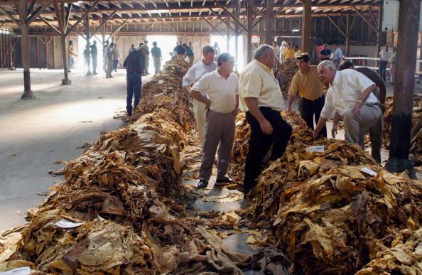 Tobacco Crop「Tobacco Auctions Open In North Carolina」:写真・画像(5)[壁紙.com]
