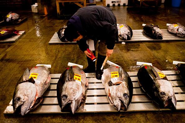 Fish「Daily Life At Japan's Tsukiji Market」:写真・画像(15)[壁紙.com]