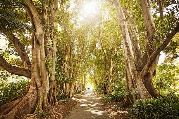 pathway through trees on sunny day:スマホ壁紙(壁紙.com)