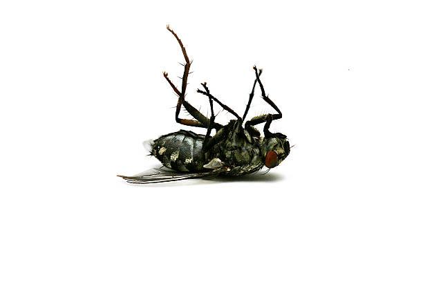 Dead fly:スマホ壁紙(壁紙.com)