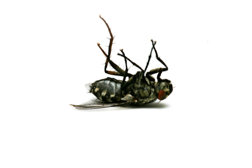 自然「Dead fly」:スマホ壁紙(3)