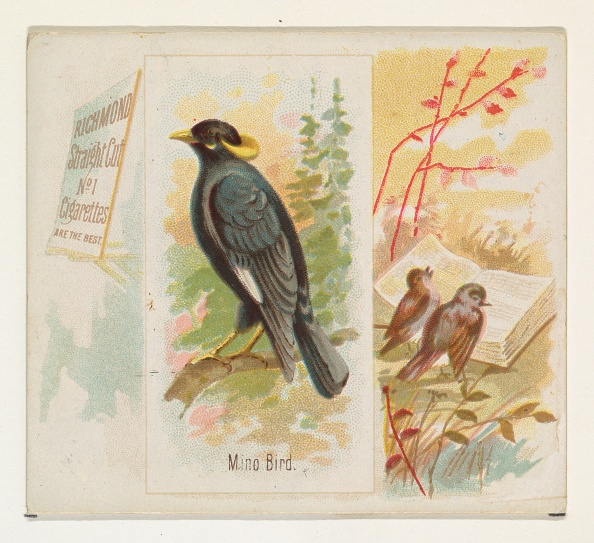 Songbird「Mino Bird」:写真・画像(9)[壁紙.com]