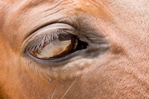 Eyesight「Horse's eye」:スマホ壁紙(10)