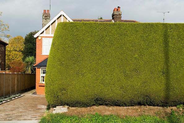 Hiding「Tall hedge by house」:写真・画像(10)[壁紙.com]