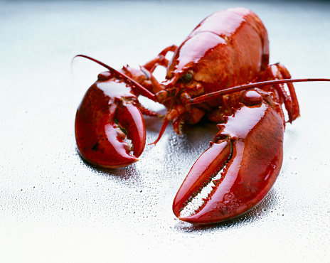 Lobster - Seafood「Fresh cooked lobster on wet ground」:スマホ壁紙(18)