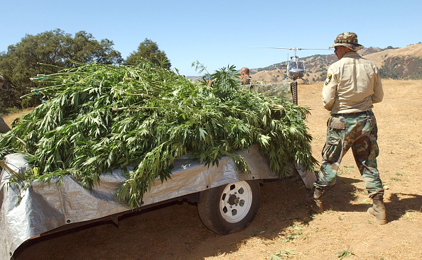Planting「Campaign Against Marijuana Planting Pot Garden Raid」:写真・画像(15)[壁紙.com]
