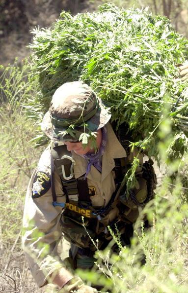 Planting「Campaign Against Marijuana Planting Pot Garden Raid」:写真・画像(18)[壁紙.com]