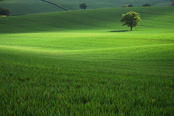 Field of green grass with a single tree:スマホ壁紙(壁紙.com)