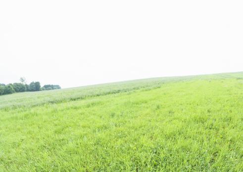 草地「Field of grass」:スマホ壁紙(14)