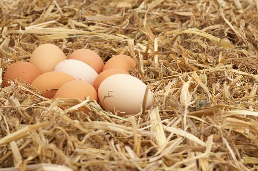 Animal Egg「eggs in soft straw nest」:スマホ壁紙(5)