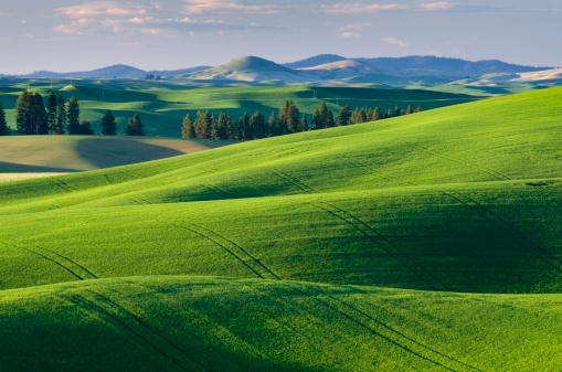 Rolling Landscape「Palouse wheat fields Washington」:スマホ壁紙(10)