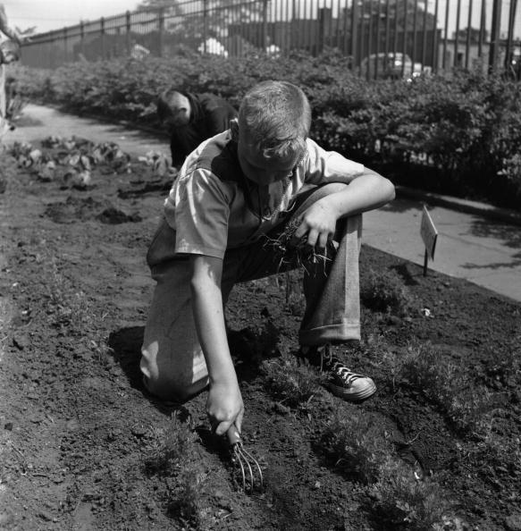 Uncultivated「Gardener At Work」:写真・画像(9)[壁紙.com]