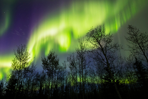 星空「Aurora borealis over silhouetted trees」:スマホ壁紙(16)