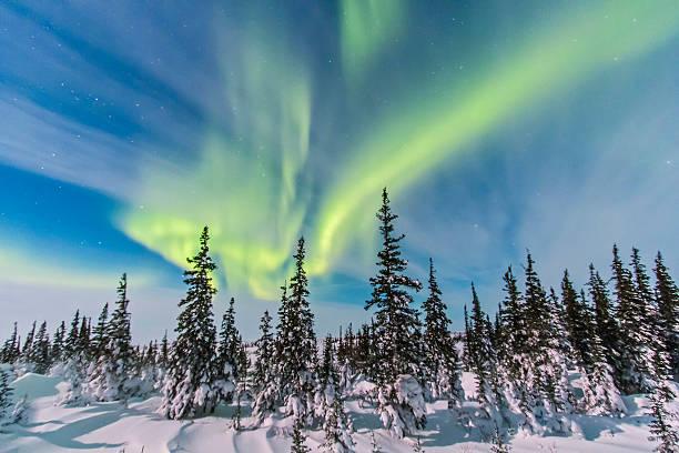 Aurora borealis over the trees in Churchill, Manitoba, Canada.:スマホ壁紙(壁紙.com)