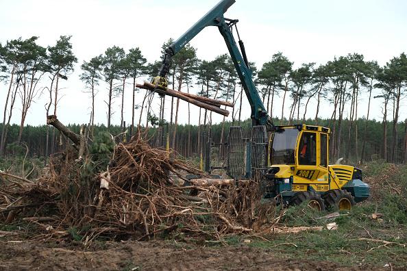 Deforestation「Environmentalists Seek To Block Tesla From Factory Site Deforestation」:写真・画像(6)[壁紙.com]