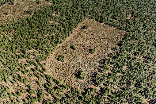Deforestation「Forestry management」:スマホ壁紙(9)
