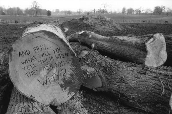 Cross Section「Tree Slogan」:写真・画像(16)[壁紙.com]