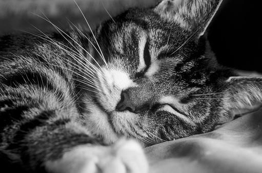 Cat「Sleepy Cat」:スマホ壁紙(6)