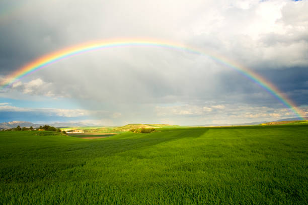 A rainbow over a green field with rain clouds:スマホ壁紙(壁紙.com)