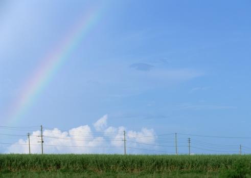 虹「Rainbow over field」:スマホ壁紙(3)