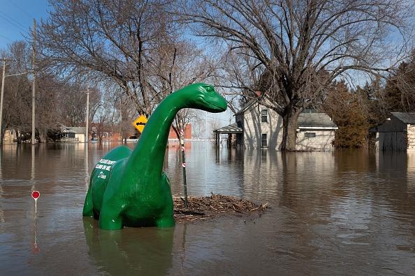 動物「Flooding Continues To Cause Devastation Across Midwest」:写真・画像(1)[壁紙.com]