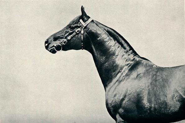 Copy Space「The head of thoroughbred racehorse, Radium, c1910.」:写真・画像(19)[壁紙.com]
