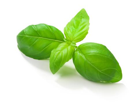 Branch - Plant Part「Basil Leafs」:スマホ壁紙(1)