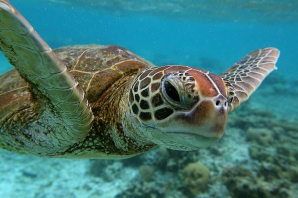 オーストラリア「Scenes Of Lady Elliot Barrier Reef Eco Island」:写真・画像(12)[壁紙.com]