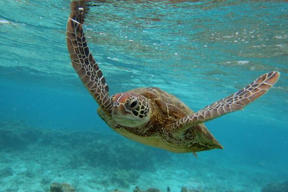 動物「Scenes Of Lady Elliot Barrier Reef Eco Island」:写真・画像(8)[壁紙.com]